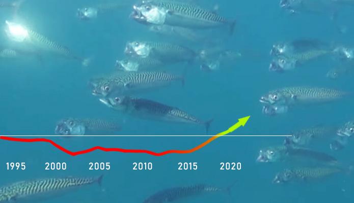 riblja populacija u porastu